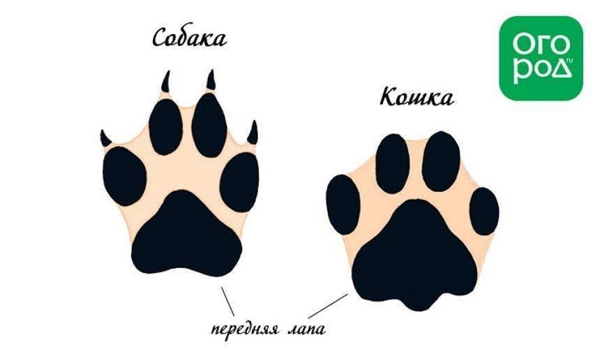 Как определить след волка
