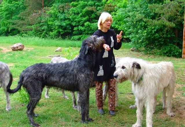 Гладкошерстные собаки среднего размера – 33 породы