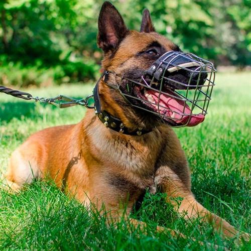 Намордники для собак: виды и выбор по размеру