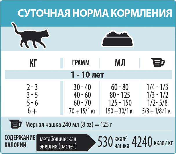 Сколько раз в день кормить взрослую кошку и котенка, нормы, таблица, советы ветеринаров
