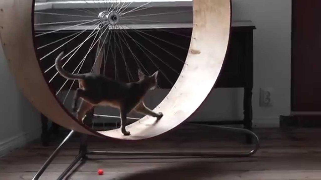 Беговое колесо для кошек: описание и изготовление своими руками