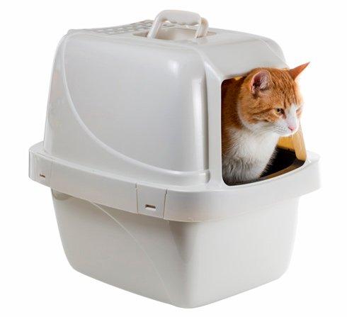 Топ-7 лучших туалетов (лотков) для кошек: закрытые, с высокими бортиками, какой купить, отзывы