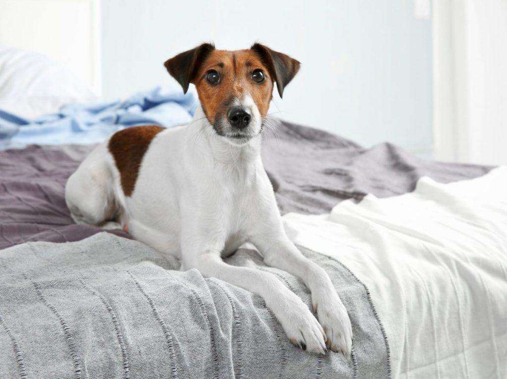 Собака спит на кровати: что говорят ученые