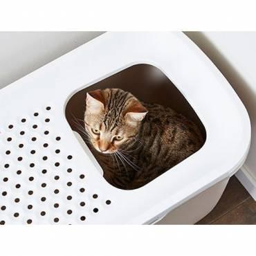 Лотки для котенка и кошки: перечень моделей с подробным описанием, как выбрать из всего многообразия