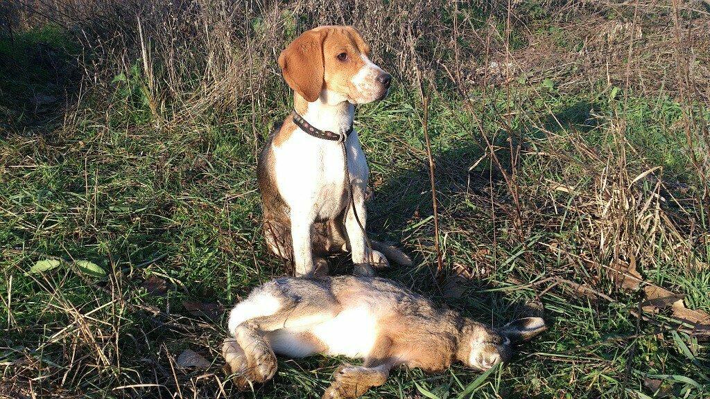 Самые верные собаки — топ 25: самые интересные истории о преданных собаках