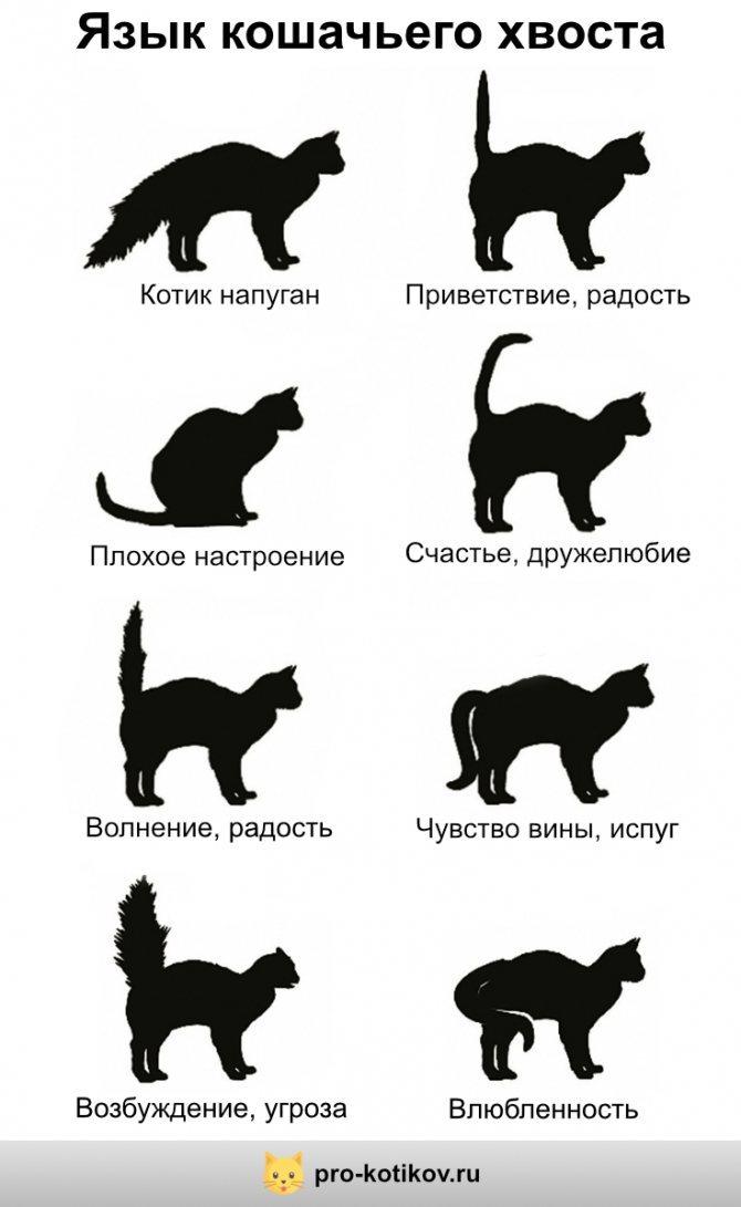 Почему у кошки воняет задница?