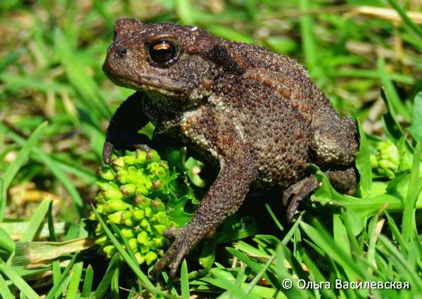 Чем питается лягушка в природе и в домашних условиях?