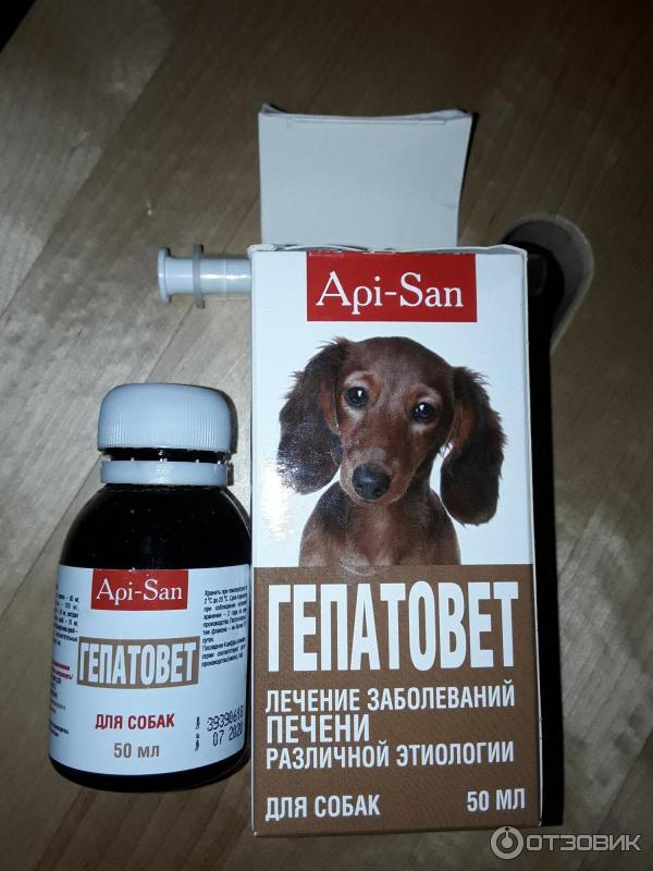 Чтобы печень не болела – поможет гепатовет для собак