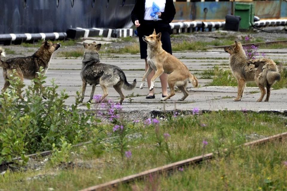 Как избавиться от бродячих собак во дворе законно