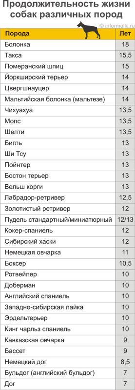 Сколько живут шарпеи в домашних условиях: средняя продолжительность жизни питомцев, от чего она зависит и как продлить этот срок