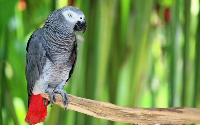 Виды попугаев: все породы, названия, описание и фото