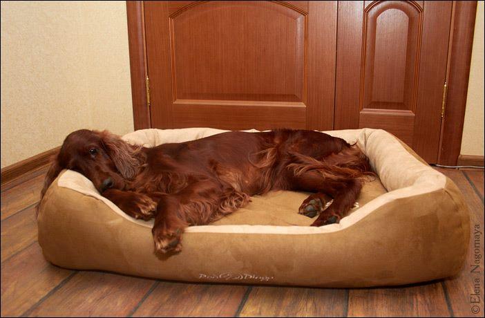Как отучить собаку прыгать на диван кровать