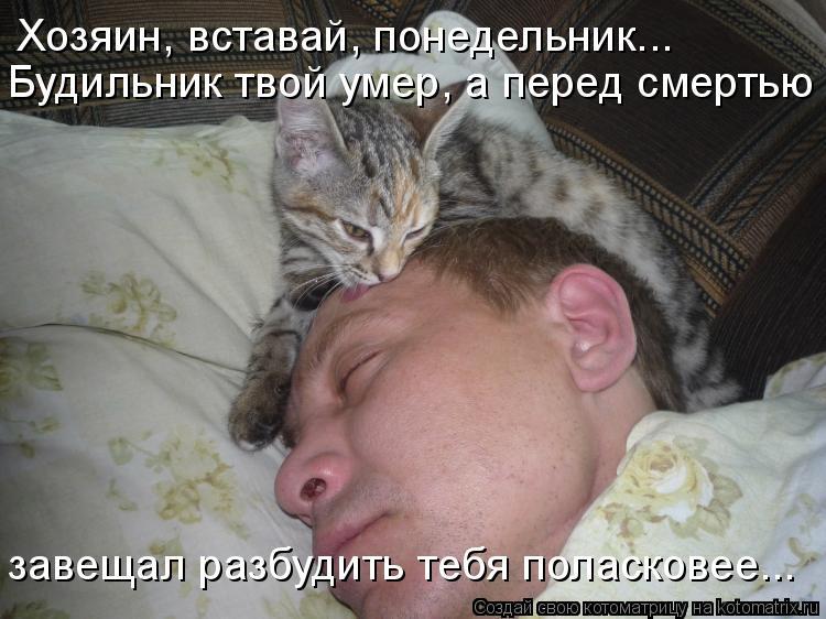 Почему нельзя беспокоить собак и кошек, когда они спят