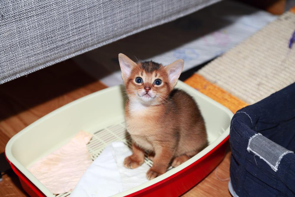 10 причин, из-за чего кошка какает не в лоток, и что делать