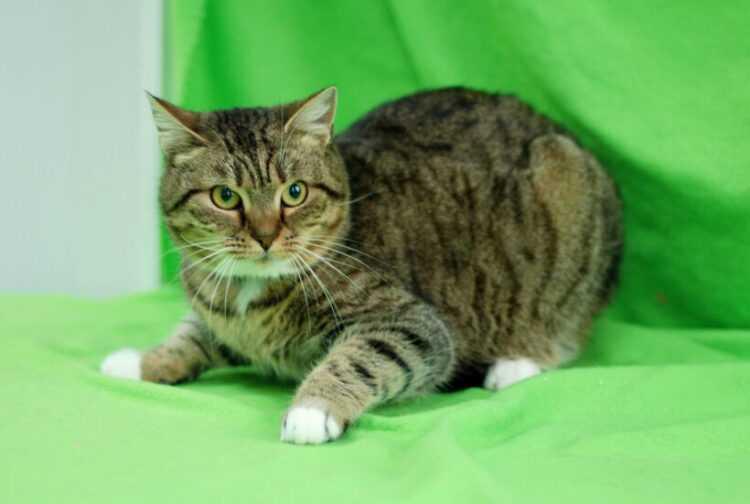 Как назвать котенка - мальчика или девочку - по окрасу, характеру, гороскопу и не только | сайт о домашних животных