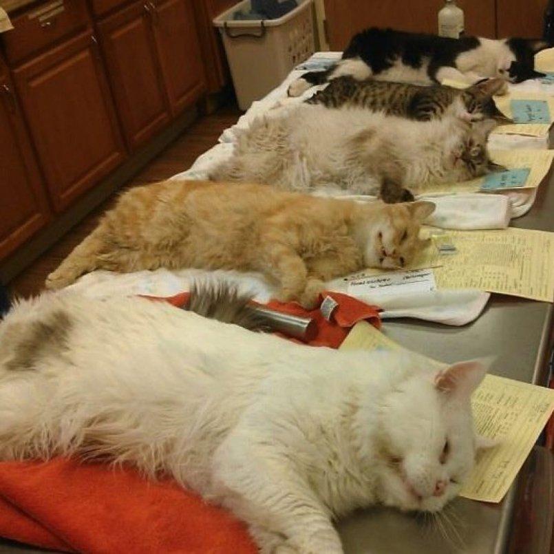 """Кот справляет нужду в неположенных местах: причины и как его от этого отучить   блог ветклиники """"беланта"""""""