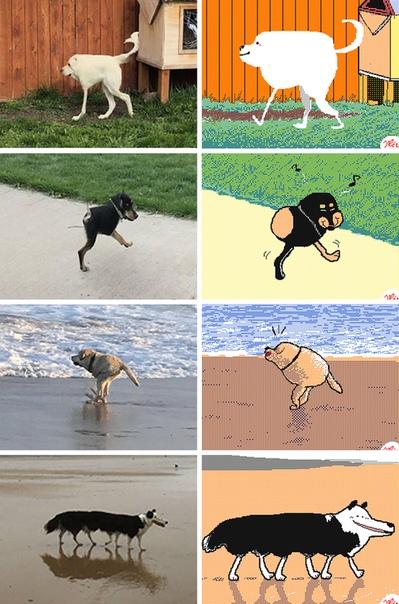 Самые известные животные, ставшие мемами