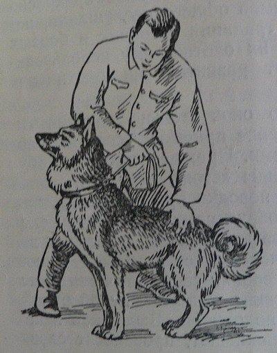 Как дрессировать взрослую собаку в домашних условиях и научить выполнять команды