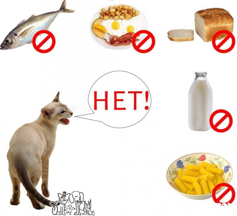 Корм для кошки: рекомендации ветеринара, как правильно выбрать корм