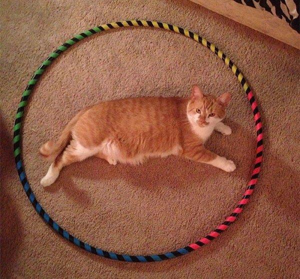 Как приручить уличную кошку или котенка: 9 шагов