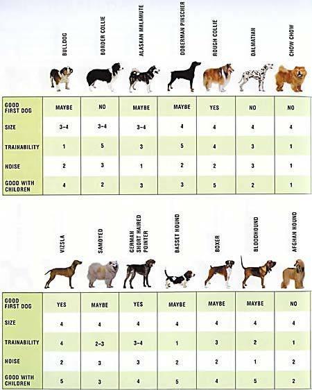Собаки сколько пород существует