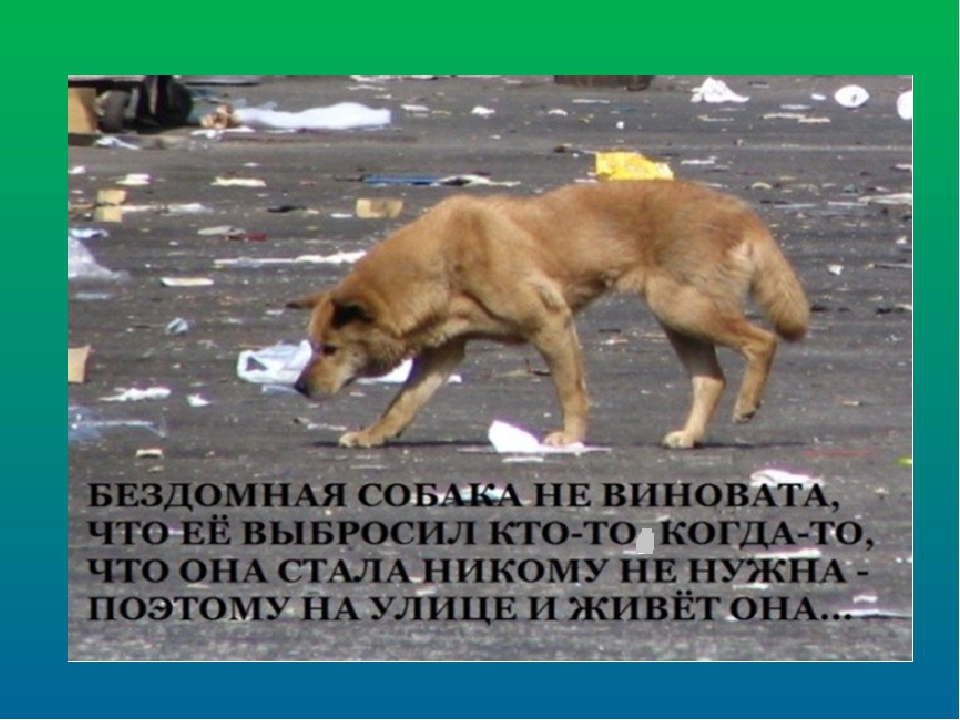 Пожаловаться на бродячих собак: порядок действий, куда обращаться, образец заявления