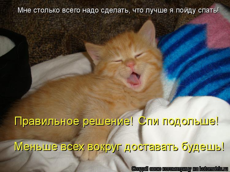 Можно ли гладить кота когда он спит