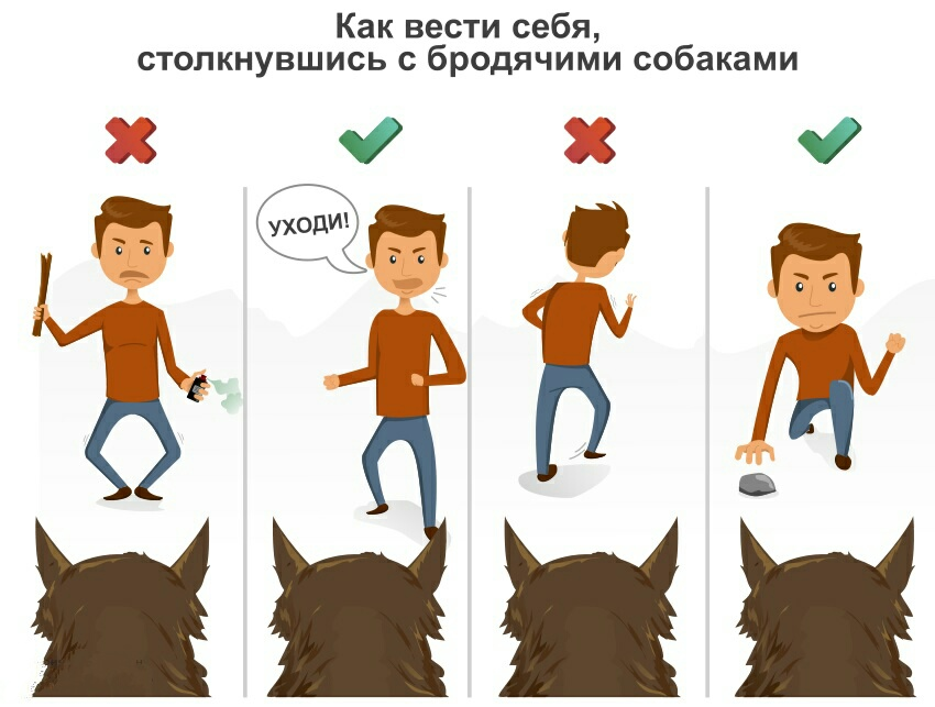 Как вести себя с животными из приюта: пять основных правил