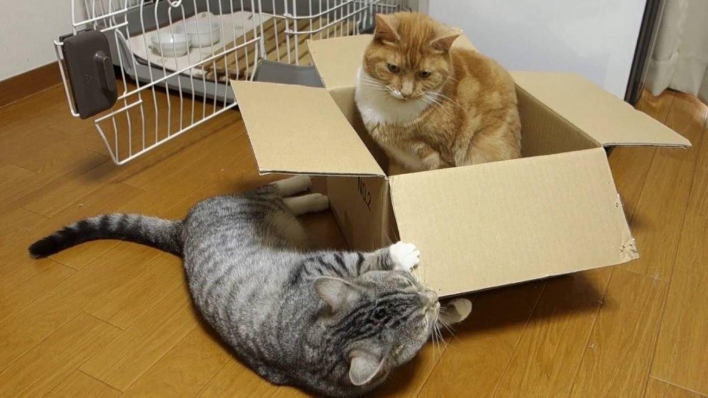 Правда раскрыта: почему кошки так любят лежать в пакетах, коробках и на бумаге. почему коты любят коробки: топ основных причин