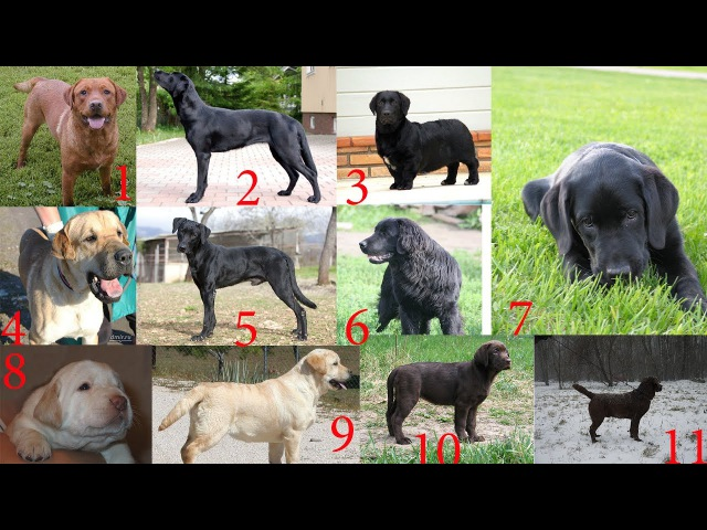 Как узнать породу своей собаки маленькой породы