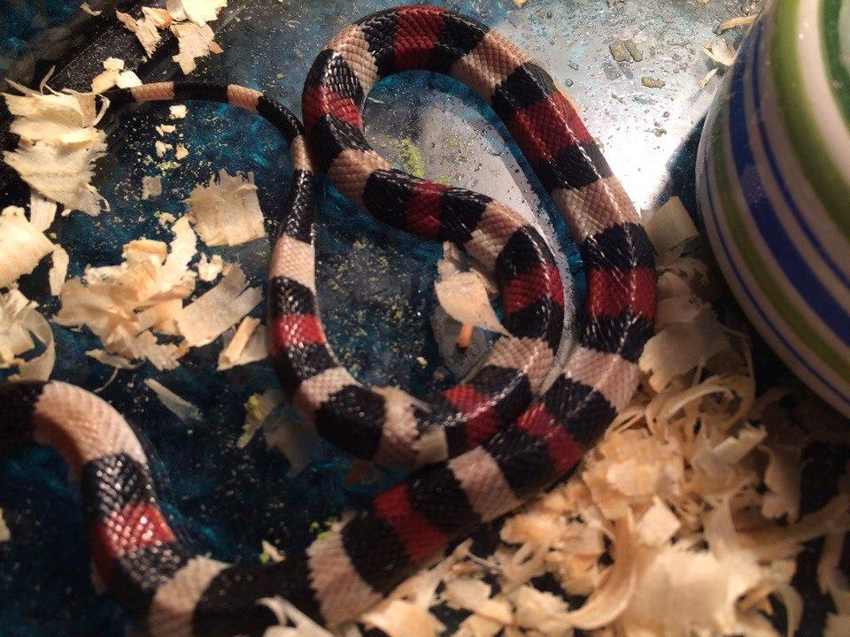 Виды домашних змей: уход, кормление и особенности содержания