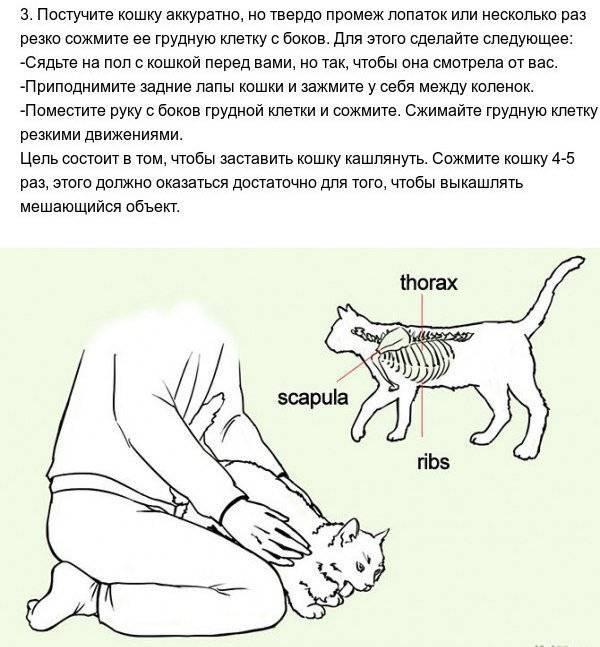 Что делать если кошку рвет сухим кормом