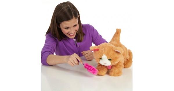 Усатый кодекс: 10 вещей, которыми обязательно занимается каждая кошка