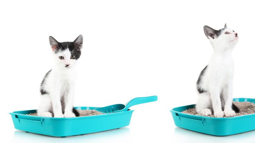 Как приучить кошку к лотку без особых усилий – мой опыт