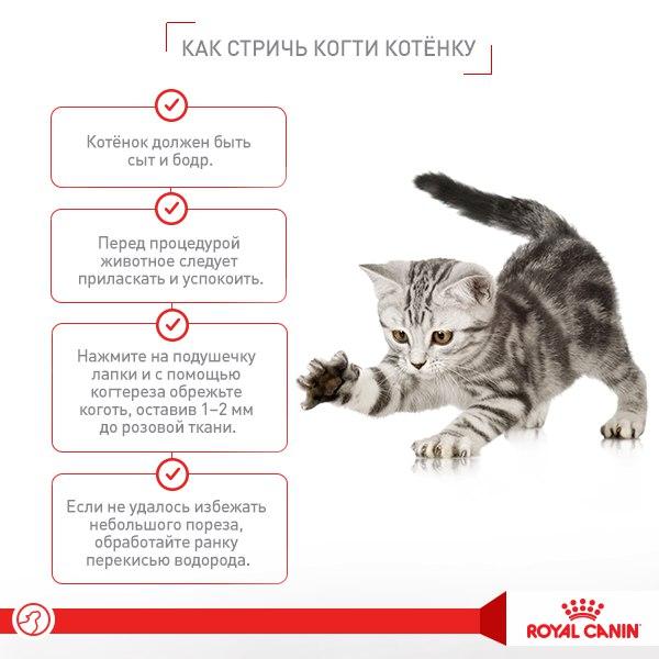 Прививки кошкам какие и когда делать