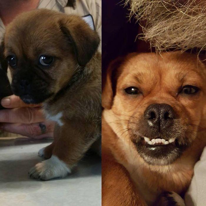12 самых дешёвых пород собак