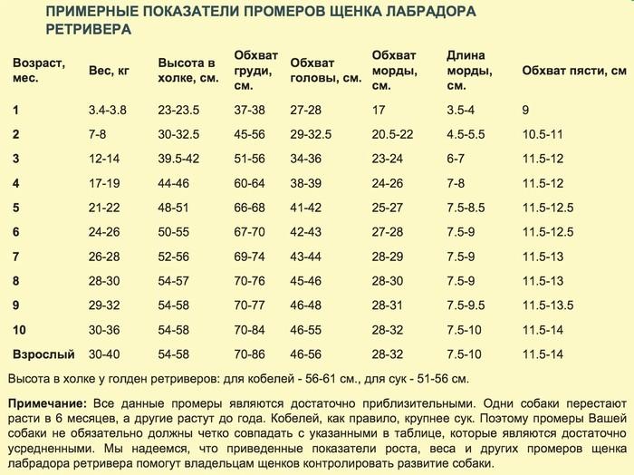 Вес щенков немецкой овчарки по месяцам, таблица - фото щенков по месяцам с 1 по 12. - petstime.ru