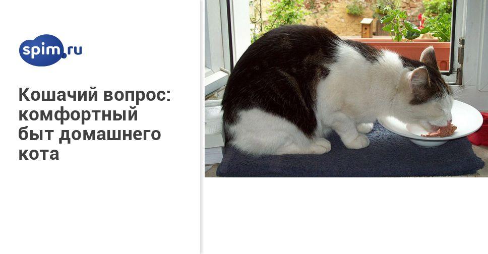 Люди которые не любят кошек ответ психолога – любящие коты