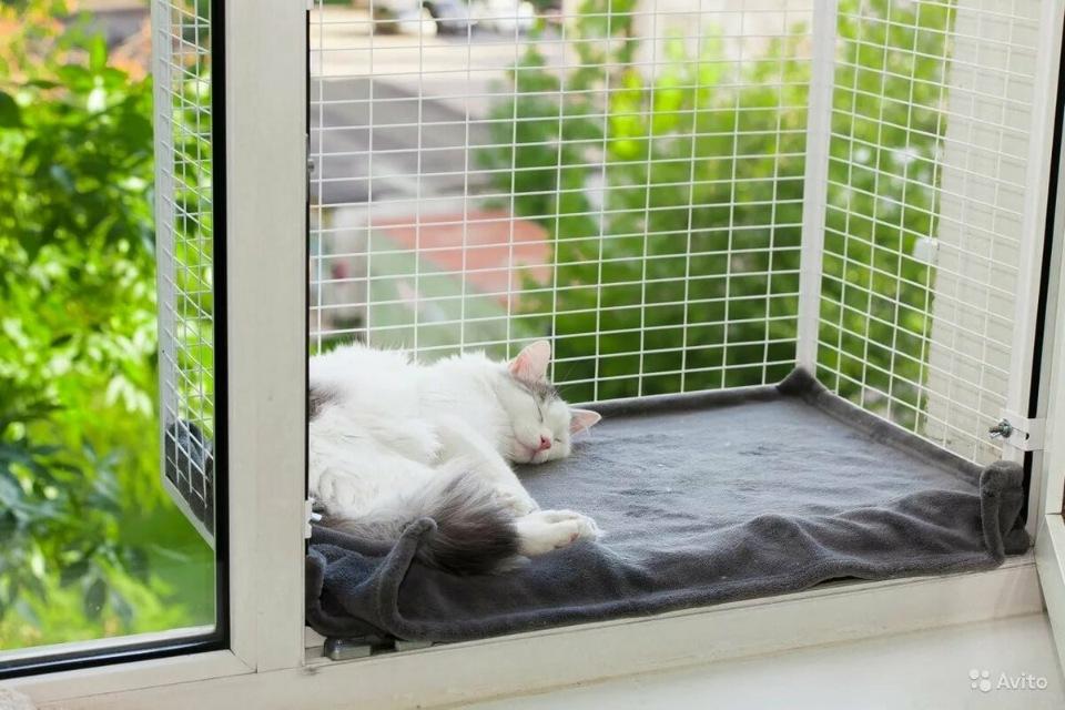 Я — зоопсихолог и знаю, почему ваша кошка так себя ведёт