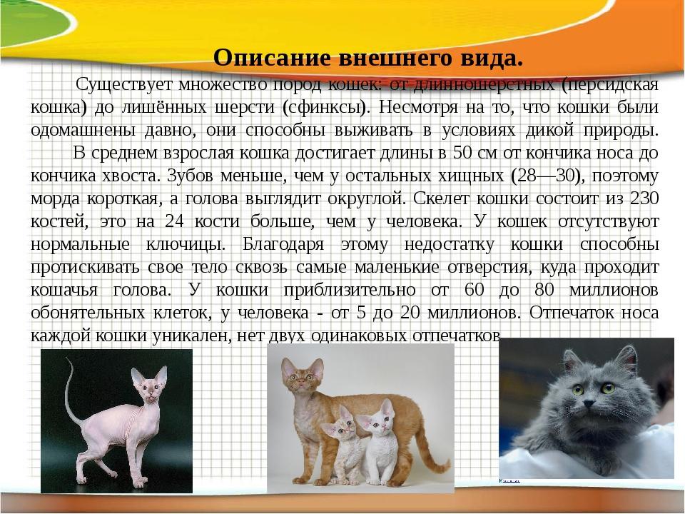 Кошки породы аравийский мау (17 фото): описание, особенности ухода за взрослыми кошками и котятами