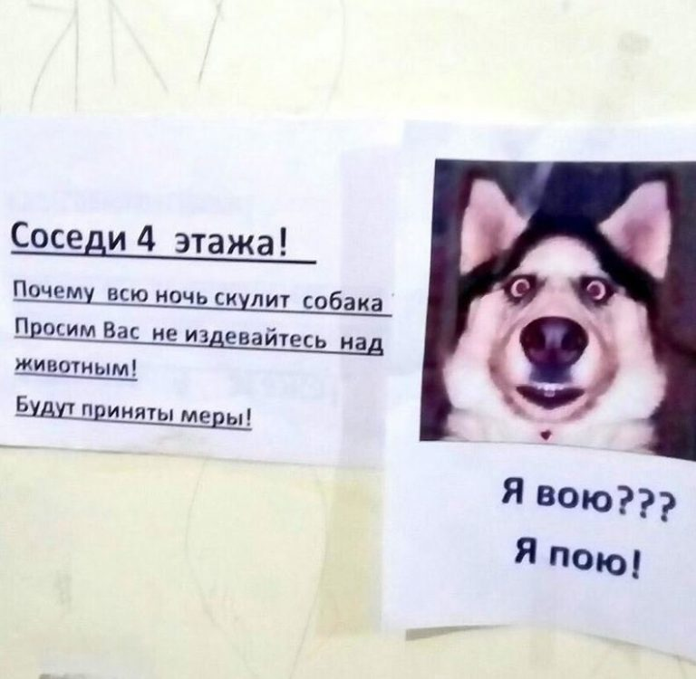 Что делать, если у соседей лает собака: алгоритм действий