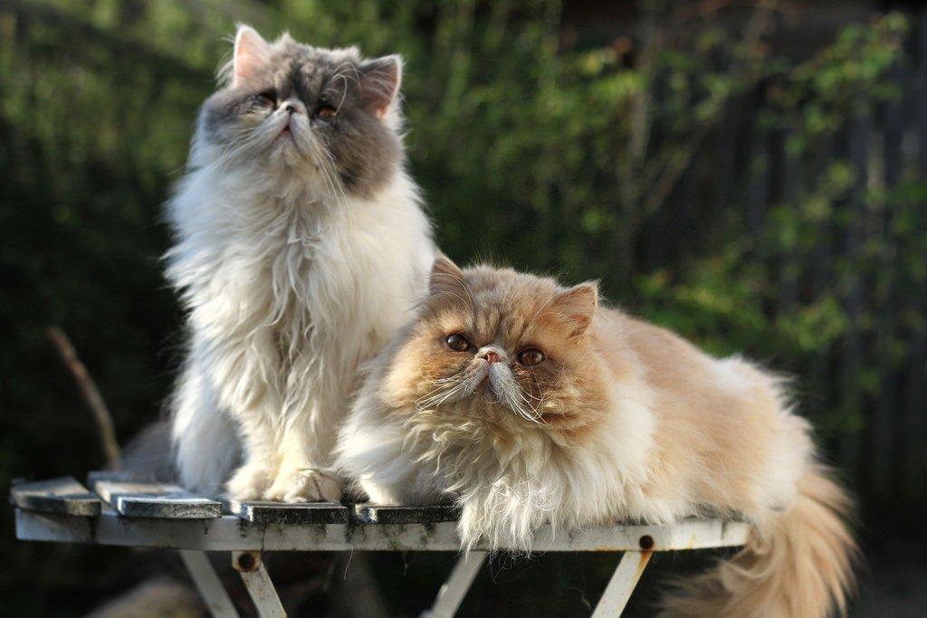 Чем кормить котенка в 2, 3, 4 месяца. лучшие корма и что не давать