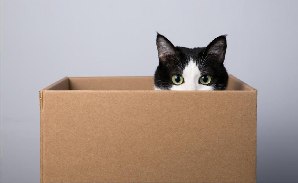 Почему кошки любят коробки и пакеты – pet-mir.ru