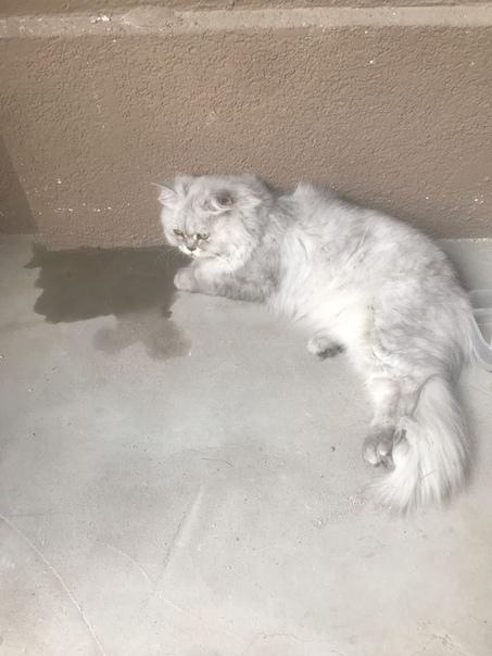 Кошка в доме: приметы и поверья, это хорошо или плохо