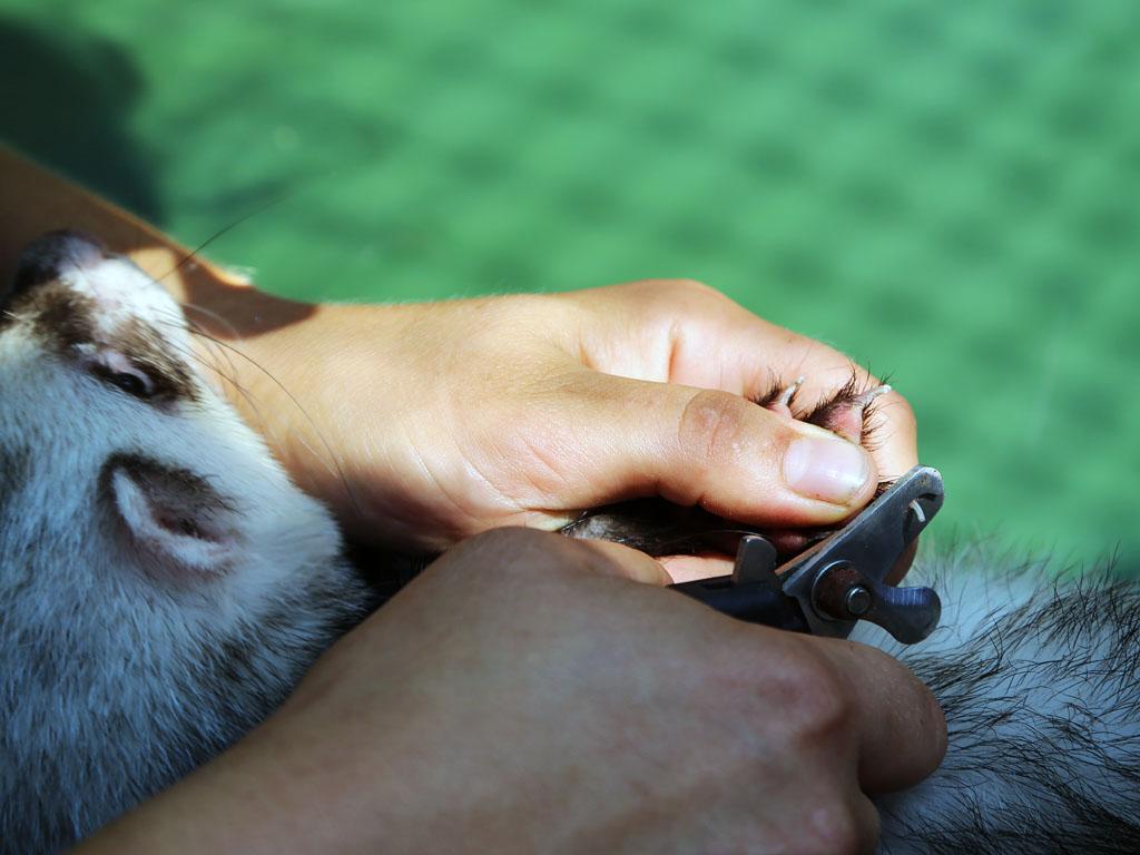 Как стричь первый раз щенка йорка? секреты грумеров
