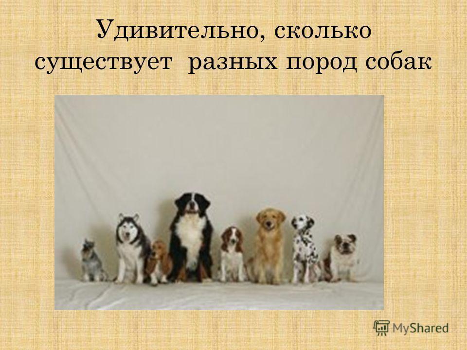 Сколько пород собак существует в мире   количество
