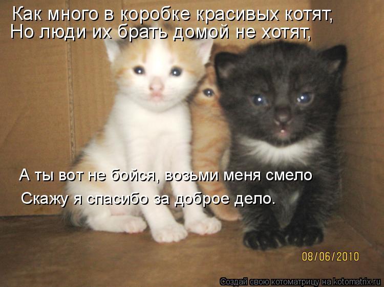 Как подружить кота и кошку в одной квартире между собой