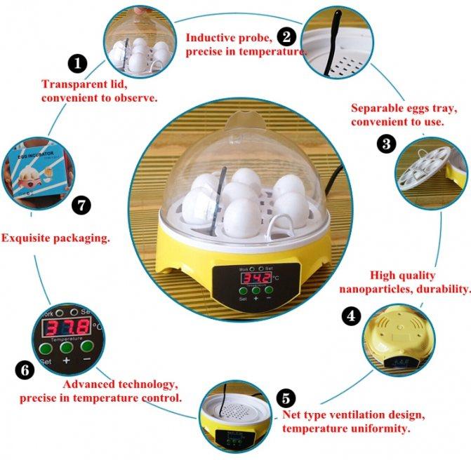 Анализ на яйца глистов. как сдавать кал на я/глист
