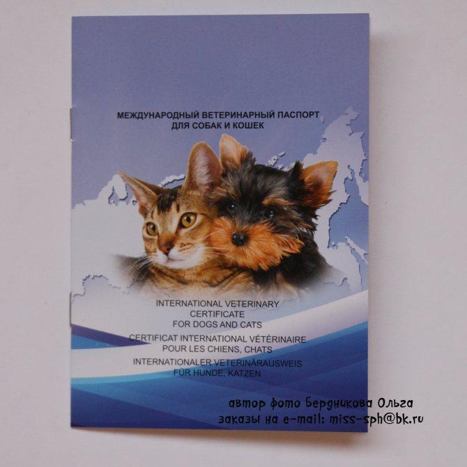 Заполнение ветеринарного паспорта для кошек