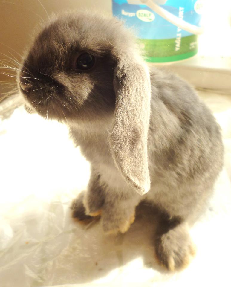 Сколько стоит живой домашний кролик - дневник фермера ferma-lux.ru